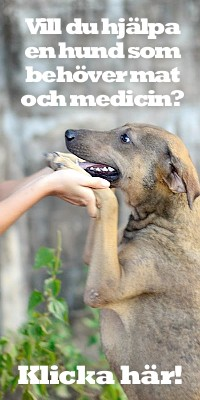 Dog Rescue Thailand